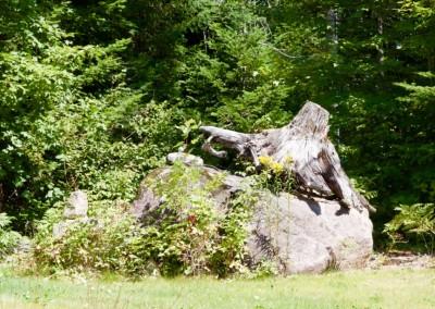 Mont Baldy - Élément naturel - Souche